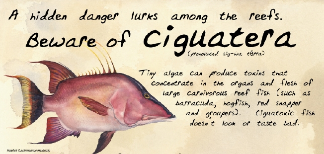 The Latest on Ciguatera Fish Poisoning – The Fisheries Blog