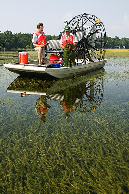Guatemala s fish face threat from aquatic invader for Lake seminole fishing