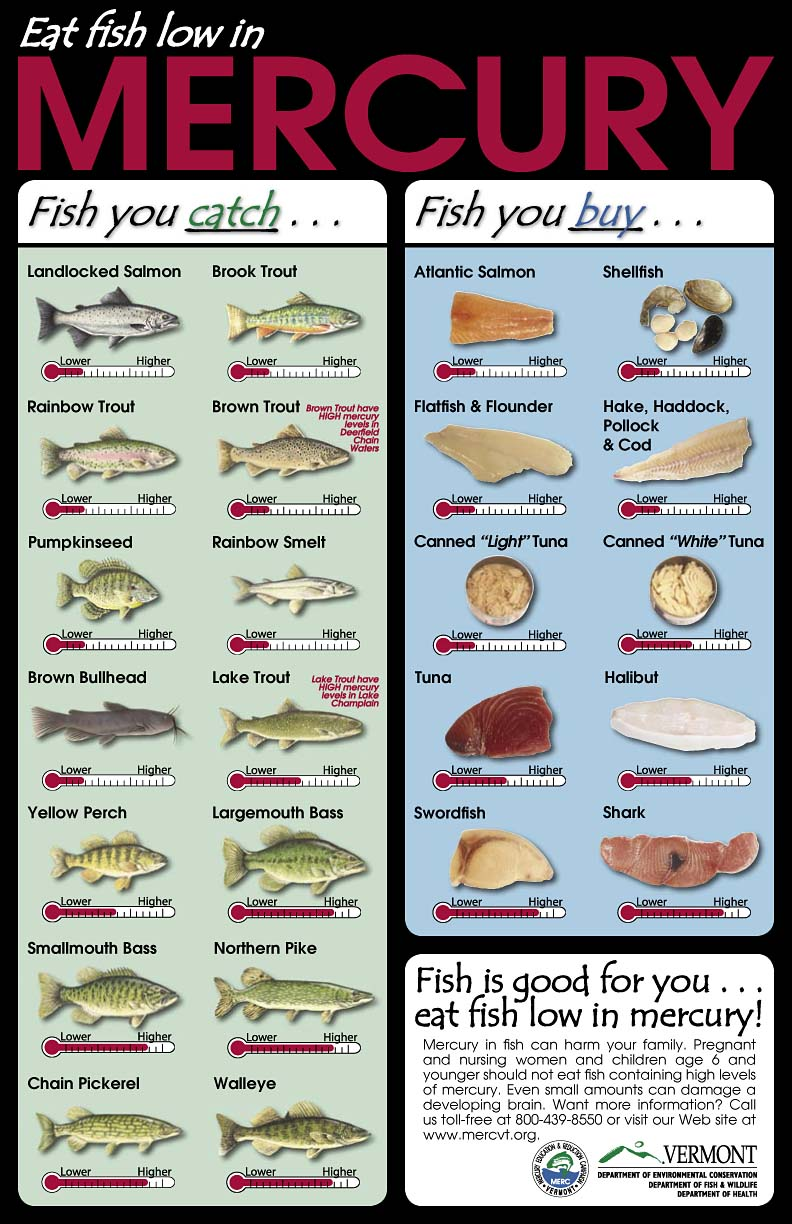 Mercury in fish what should i eat the fisheries blog for What fish is healthy to eat