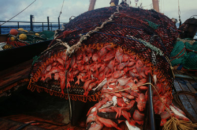 Bottom of the barrel – Expansion of fishing to the deep ...