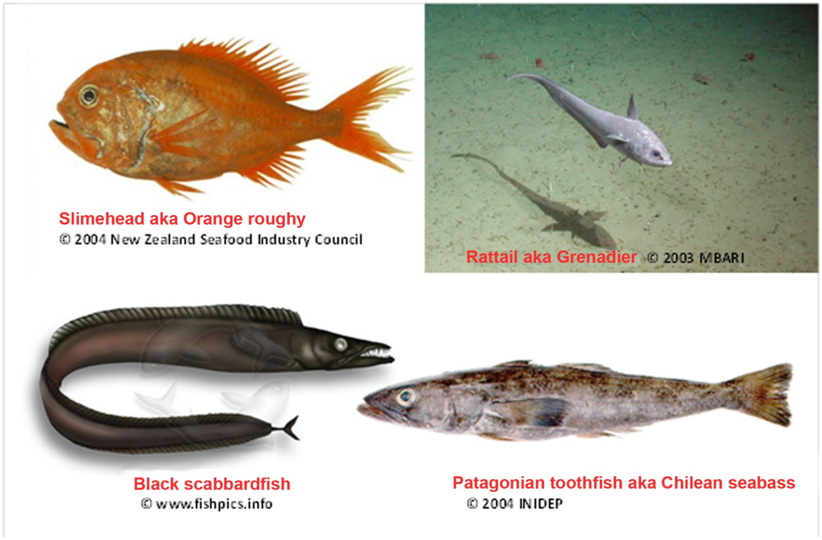 Bottom of the barrel expansion of fishing to the deep for Names of fish to eat
