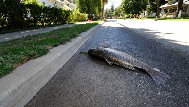 Hurricane Impacts on Fish | The Fisheries Blog