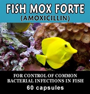 When the quick cure causes long term danger who knew for Can humans take fish mox