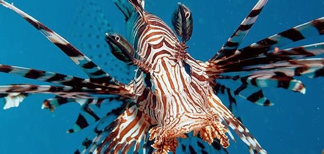 Top 5 Most Poisonous and Venomous Fish! – The Fisheries Blog