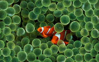 http://www.thefisheriesblog.com/2013/08/finding-nemo-lied-to-your-kids-and-they.html
