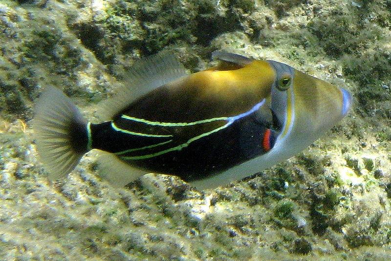 Weird Fish Names 4