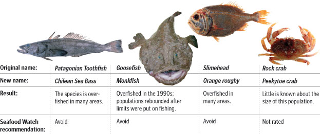 Fact or fiction the 10 question fish quiz the for Names of fish to eat