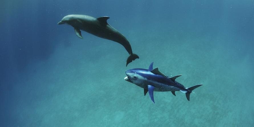 spy tuna