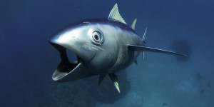 Tuna Camera