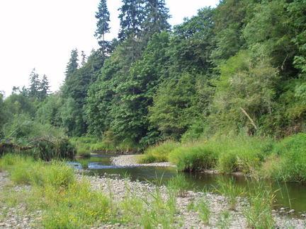 Creek Shot