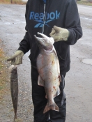 Dunmall_The_Fisheries_Blog_Peel River NWT pink salmon 2012