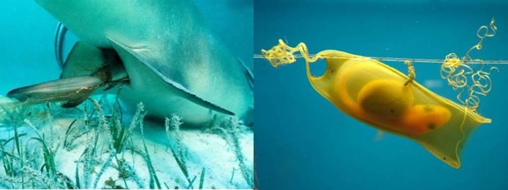 Shark Birth and Egg
