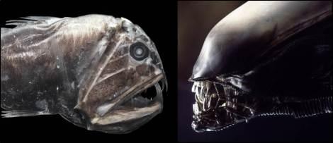 Fangtooth Alien