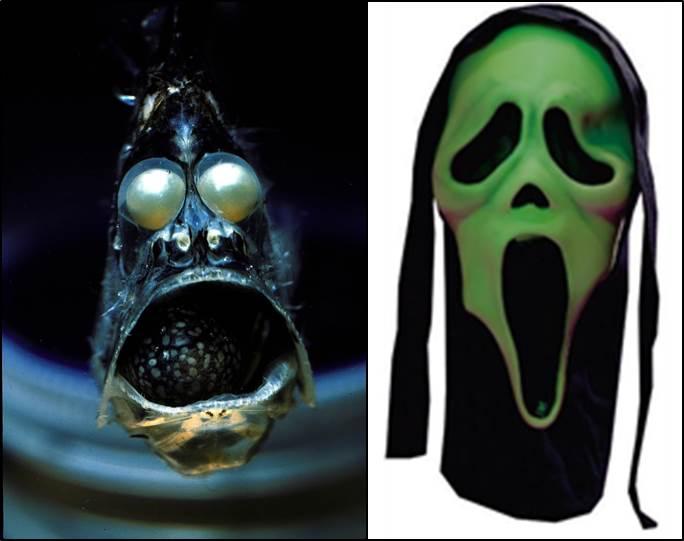 Bilderesultat for peces de las profundidades