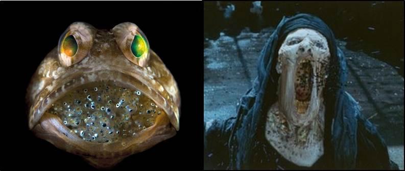 Jawfish Imhotep