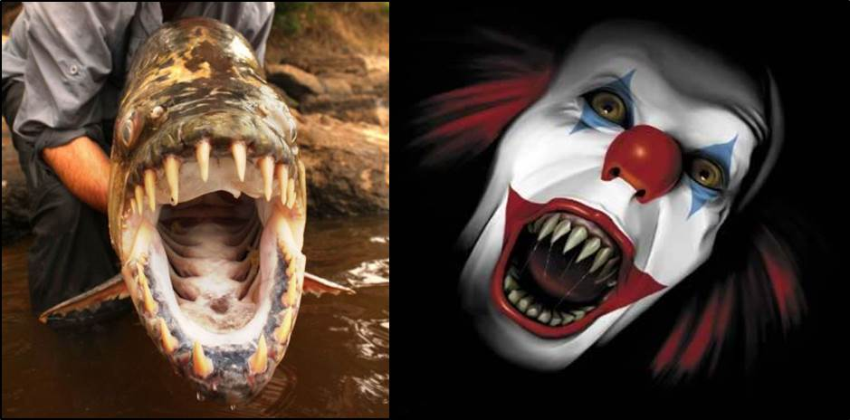 10 Scary Fish In Natural Halloween Costumes The Fisheries Blog