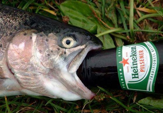 What happens when fish get drunk the fisheries blog for Drunken fish menu
