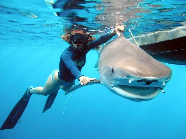 Kristine Shark