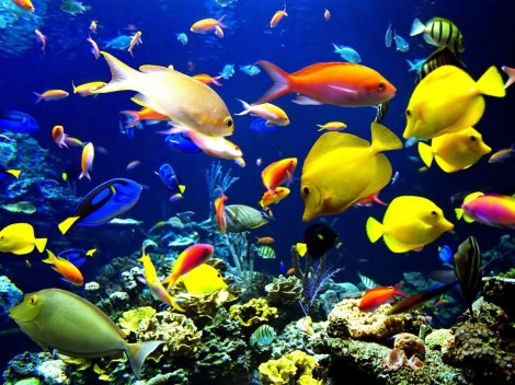 category-animal-coral-reef-life-fish_395814