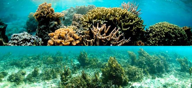 coral-reefs-algae-pnas