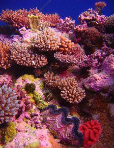 Coral_Garden