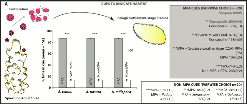 fig1a1