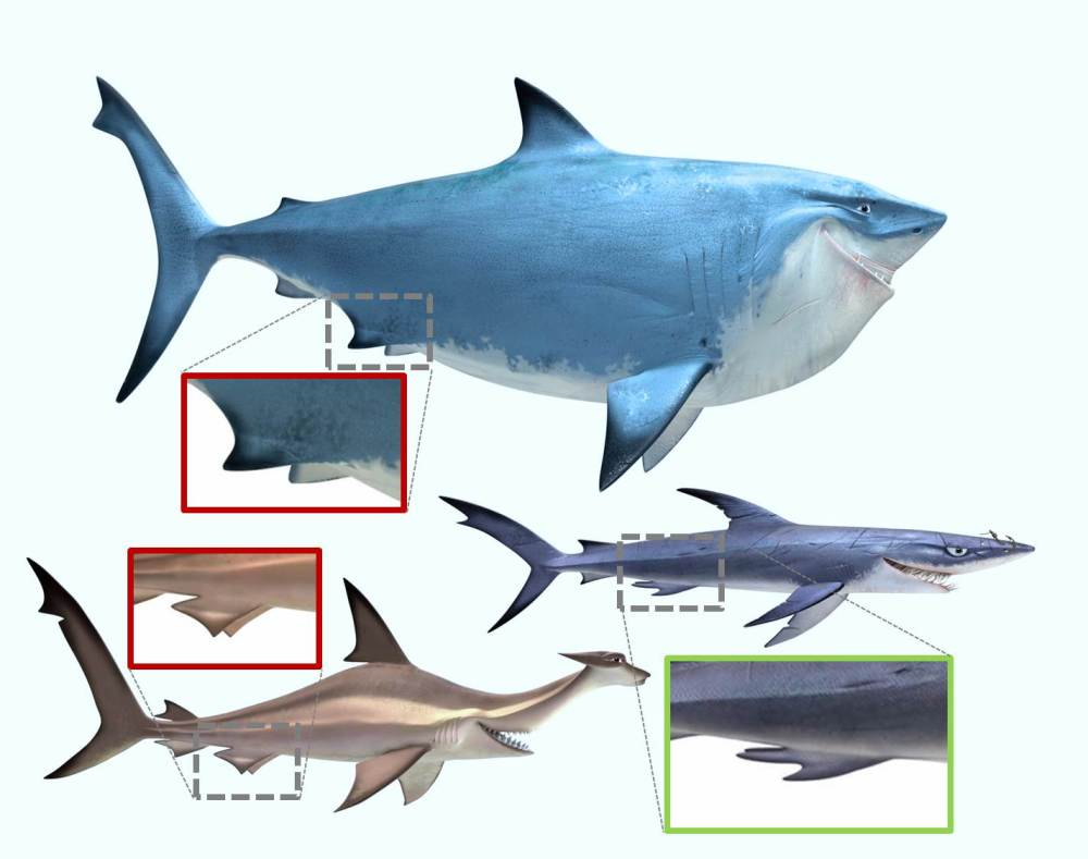Bruce and Anchor lack claspers, whereas animators gave Chum correct anatomy for male sharks.