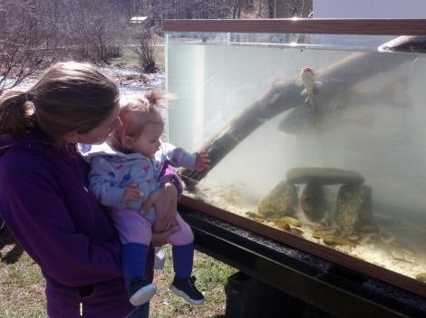 Heritage Day fish tank 2 04.06.13