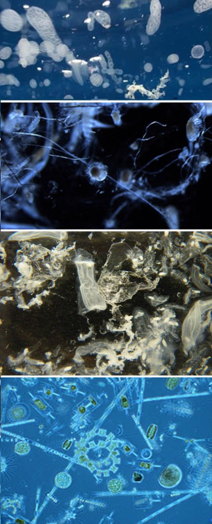 plankton or plastic pic1