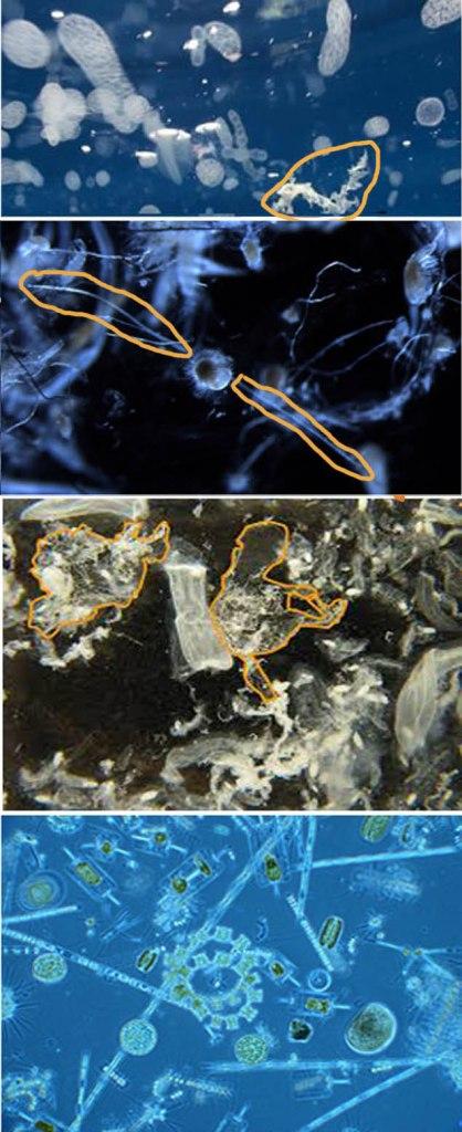 plankton or plastic pic2