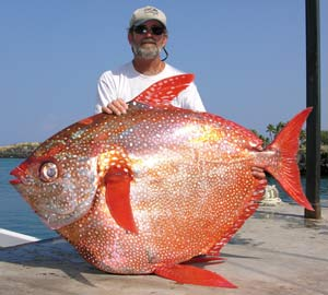 OPAH (Lampris guttatus biggest fish in the world ever caught record big huge fishes massive records largest IGFA monster fishing ocean sea giant images lb pound pictures poisson d