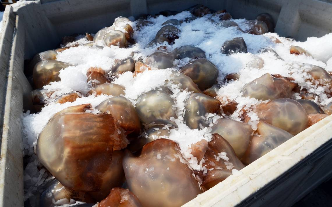 I'll have the jellyfish… – The Fisheries Blog