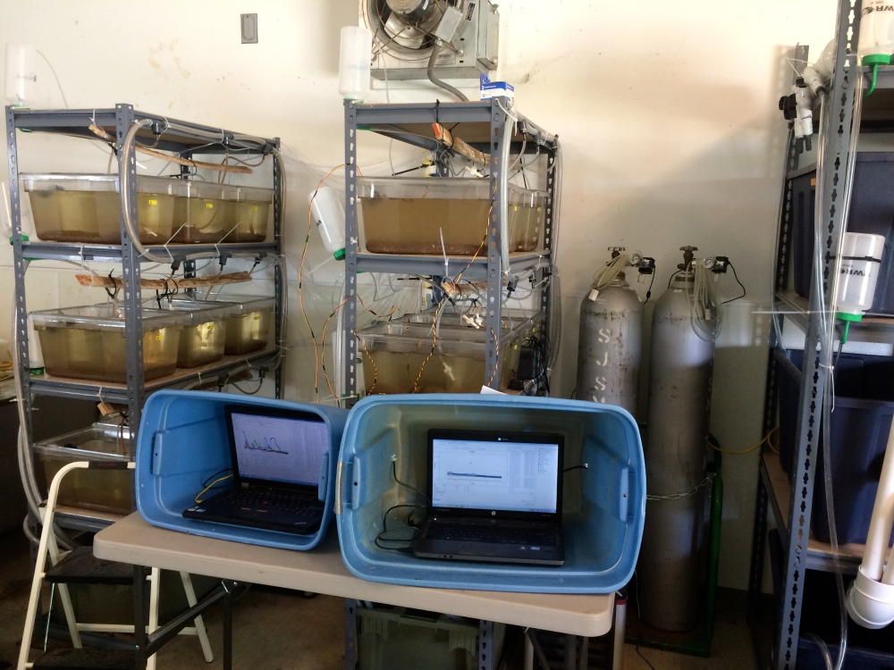 CO2 tanks and lab setup for experimental procedures that help understand the impact of CO2 on fish (Source: Caleb Hasler)
