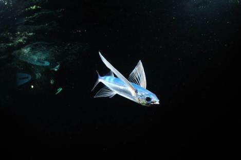 Flying Fish Night