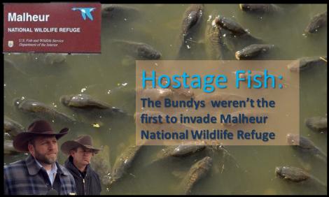 Malheur Bundy Fish PNG