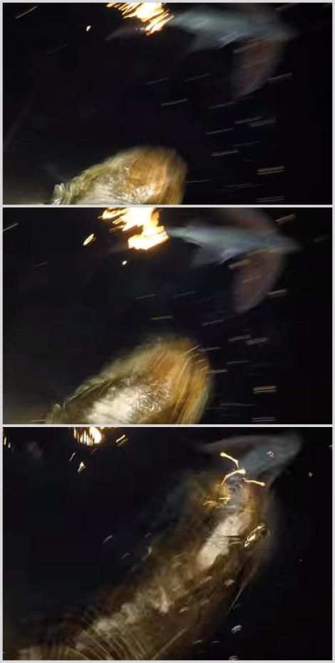 Sea Lion Eating Flying Fish