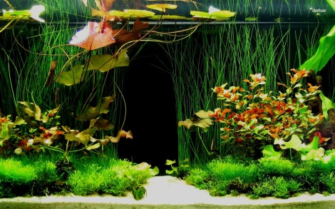 Check out all of the intangible fish in my fish tank! Source