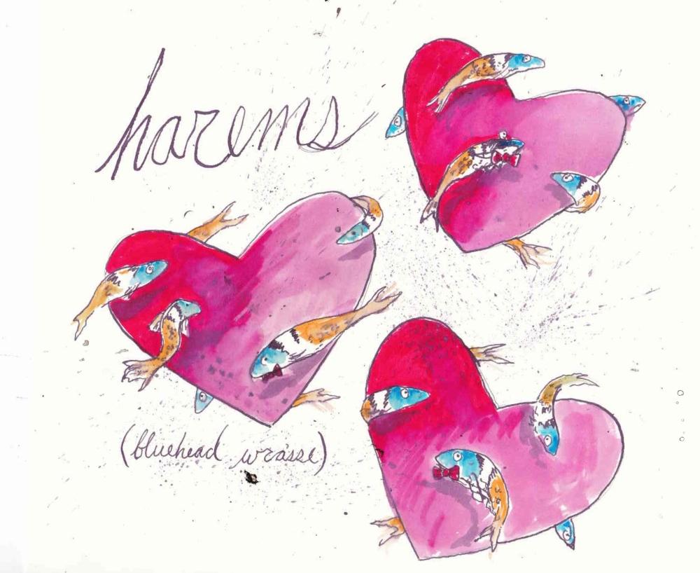 haremsfish