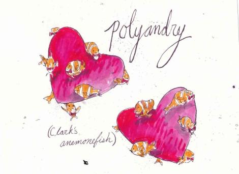 polyandryfish