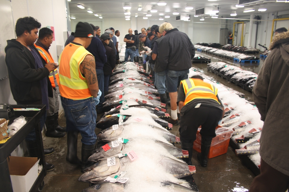 Honolulu Fish Auction