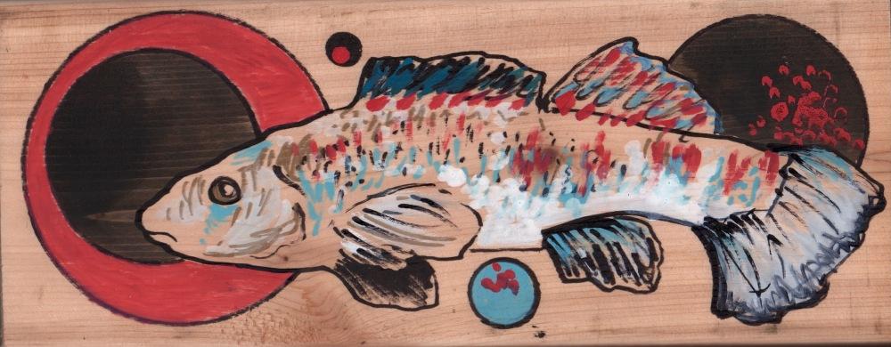 redfin darter