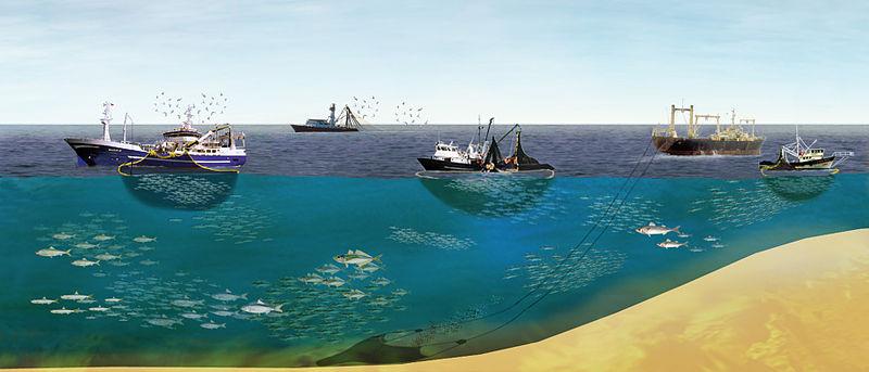 800px-East_pacific_fishing.jpg