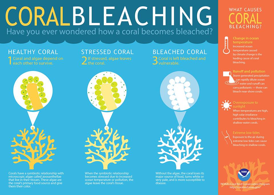 coralbleaching.jpg