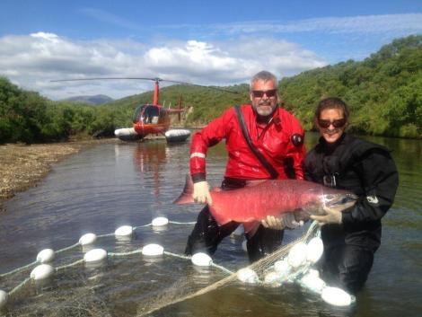 Alaska scientist, Mary Beth Loewen, holds a an Alaska Peninsula Chinook Salmon.