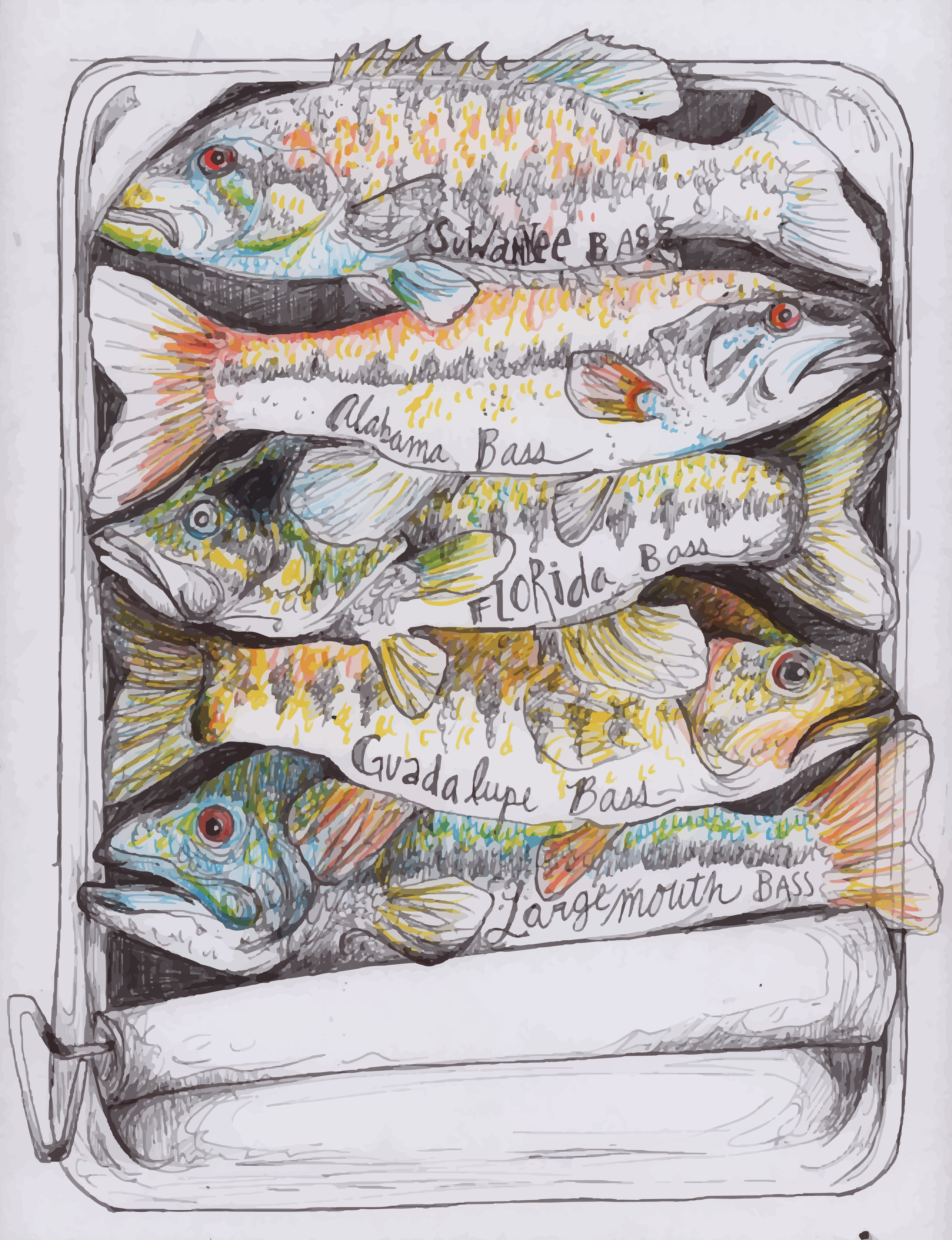 Freshwater fish art - Black Bass Are The Most Popular Freshwater Sportfish In The Usa Their Popularity As A Sportfish Has Expanded Their Distribution From North America To
