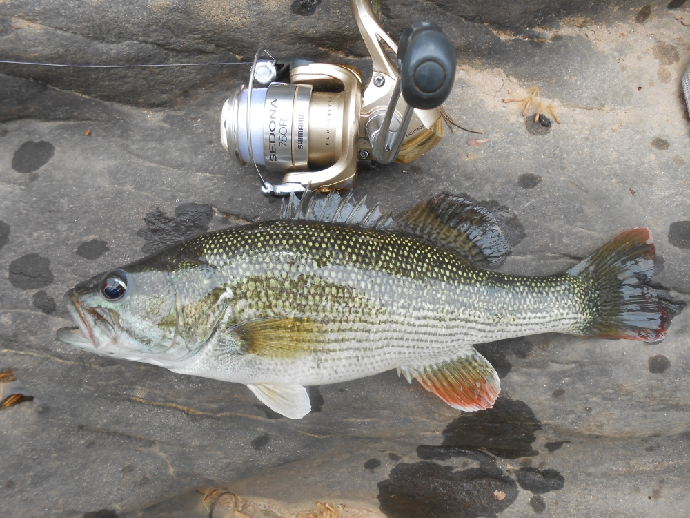Chattahoochee Bass