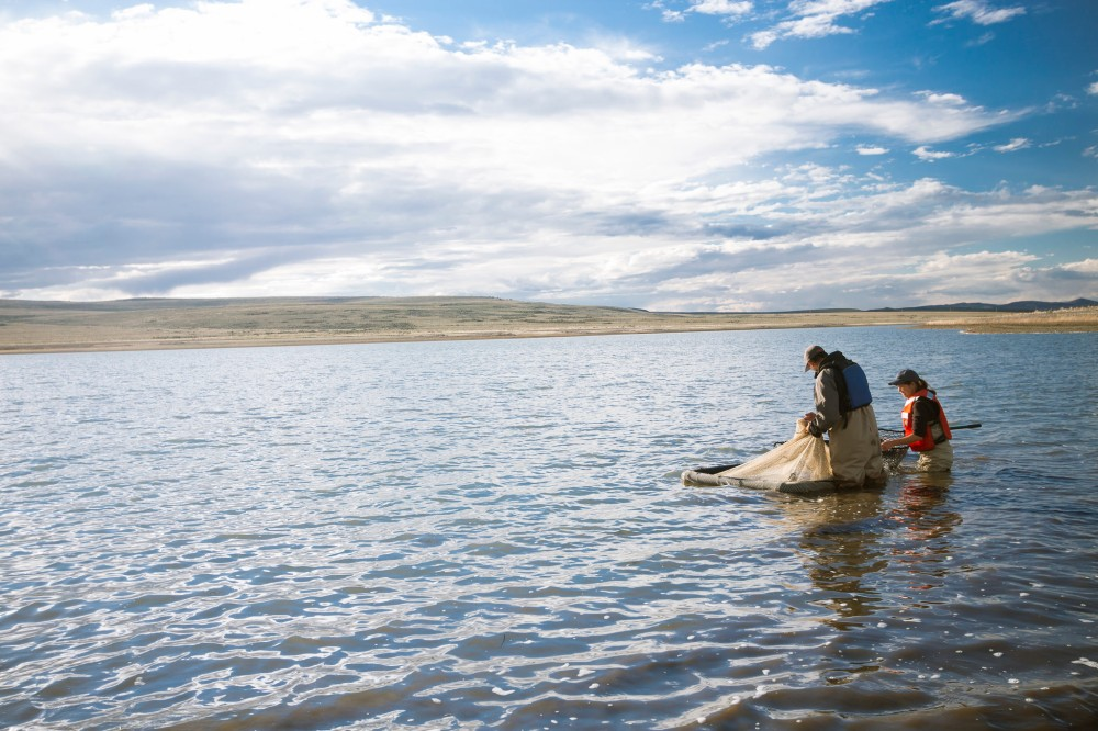 collecting-lahontan-trout-in-summit-lake