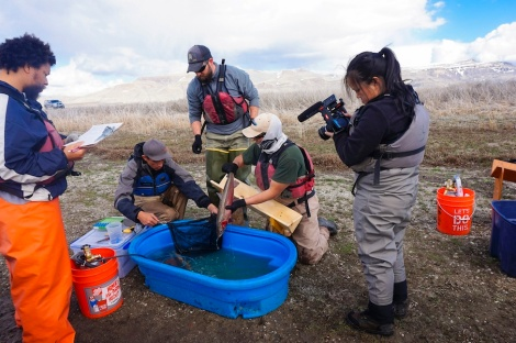measuring-lahontan-cutthroat-trout