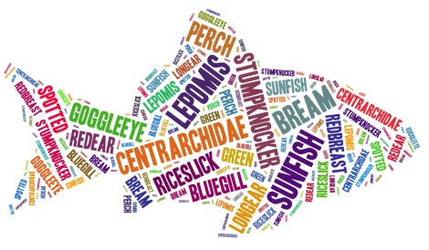 sunfish-word-cloud