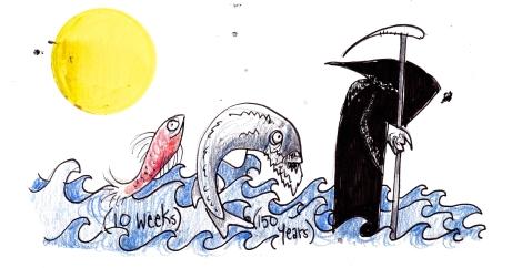 By The Fisheries Blog Artist, Hannah Dean.